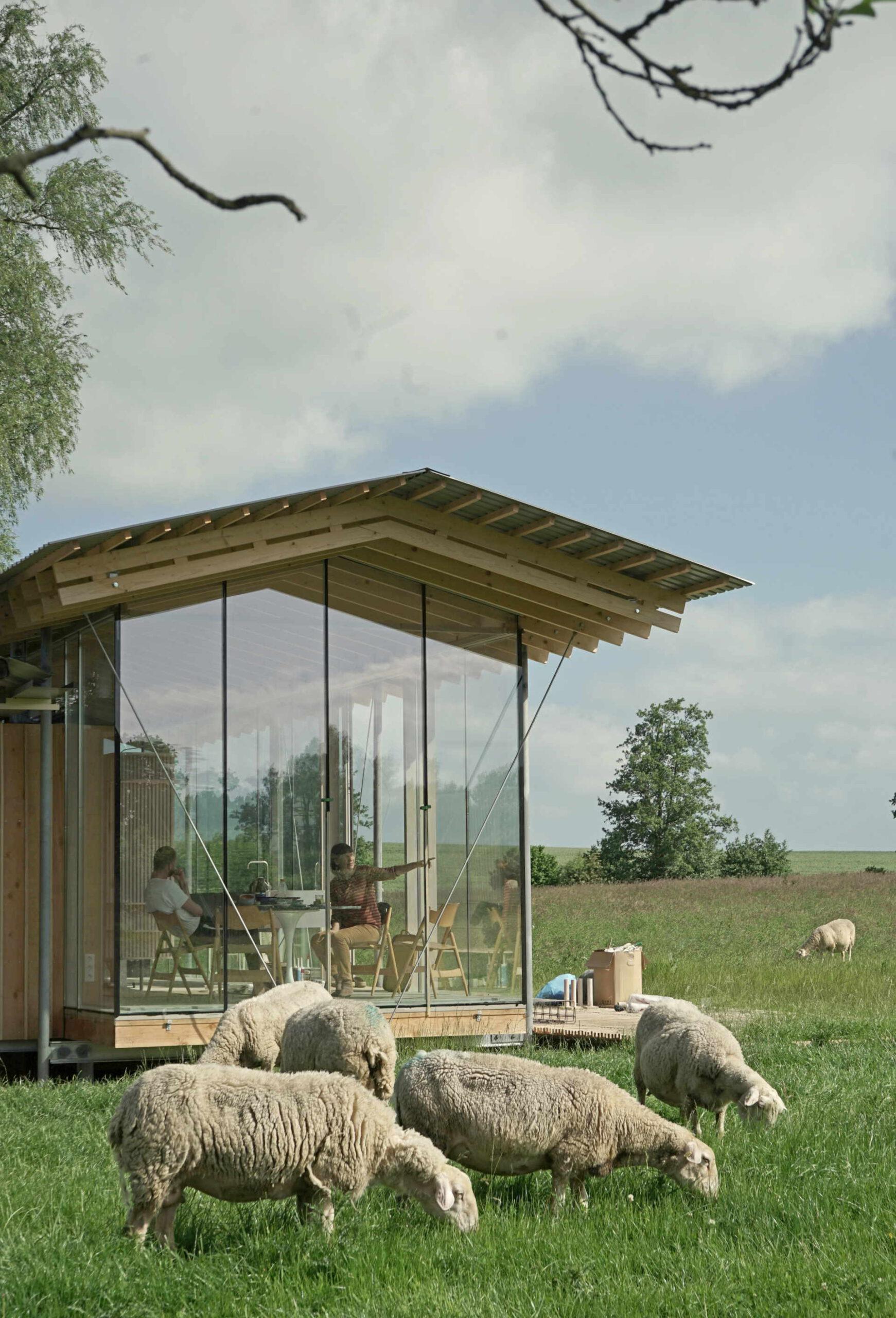 Ferienhaus Hof Ahmen - Ansicht im Umfeld mit Schafen - Seitenansicht